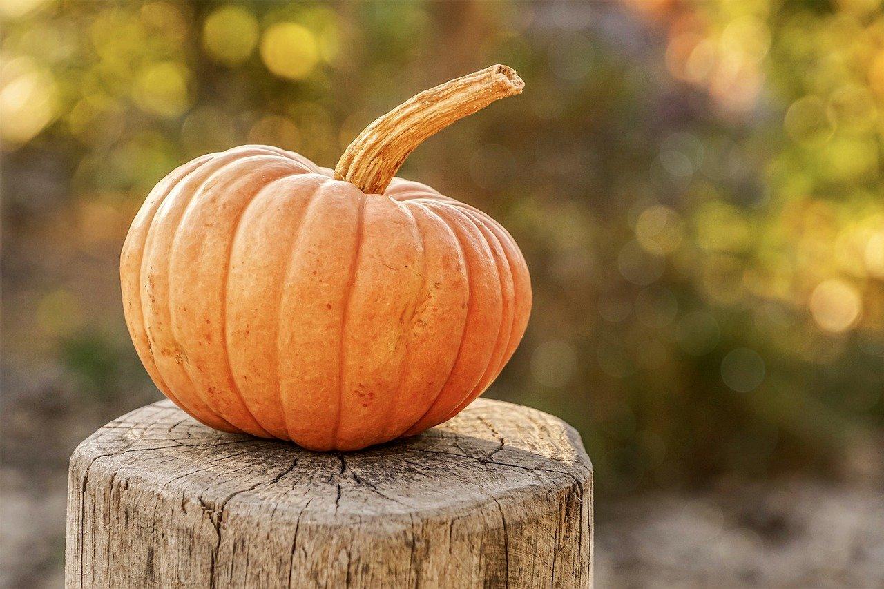 pumpkin-4454745_1280